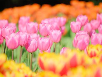 花の井保育園(認可)